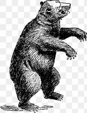 Bear - American Black Bear Polar Bear Brown Bear Clip Art PNG