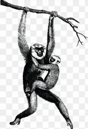 Monkey - Homo Sapiens Gibbon Clip Art PNG