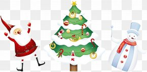 Conifer Tree - Christmas Tree PNG