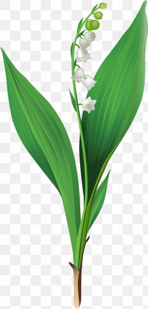 Lily Of The Valley - Lily Of The Valley Cut Flowers Clip Art PNG