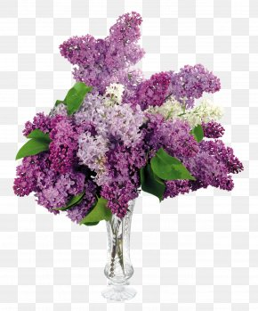 Lilac - Common Lilac Flower Bouquet Desktop Wallpaper PNG