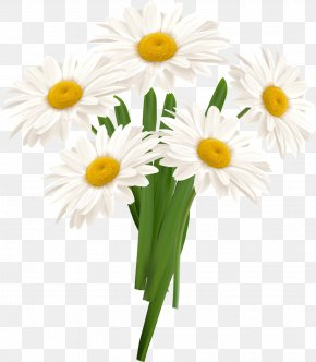 White Camomile - Flower PNG