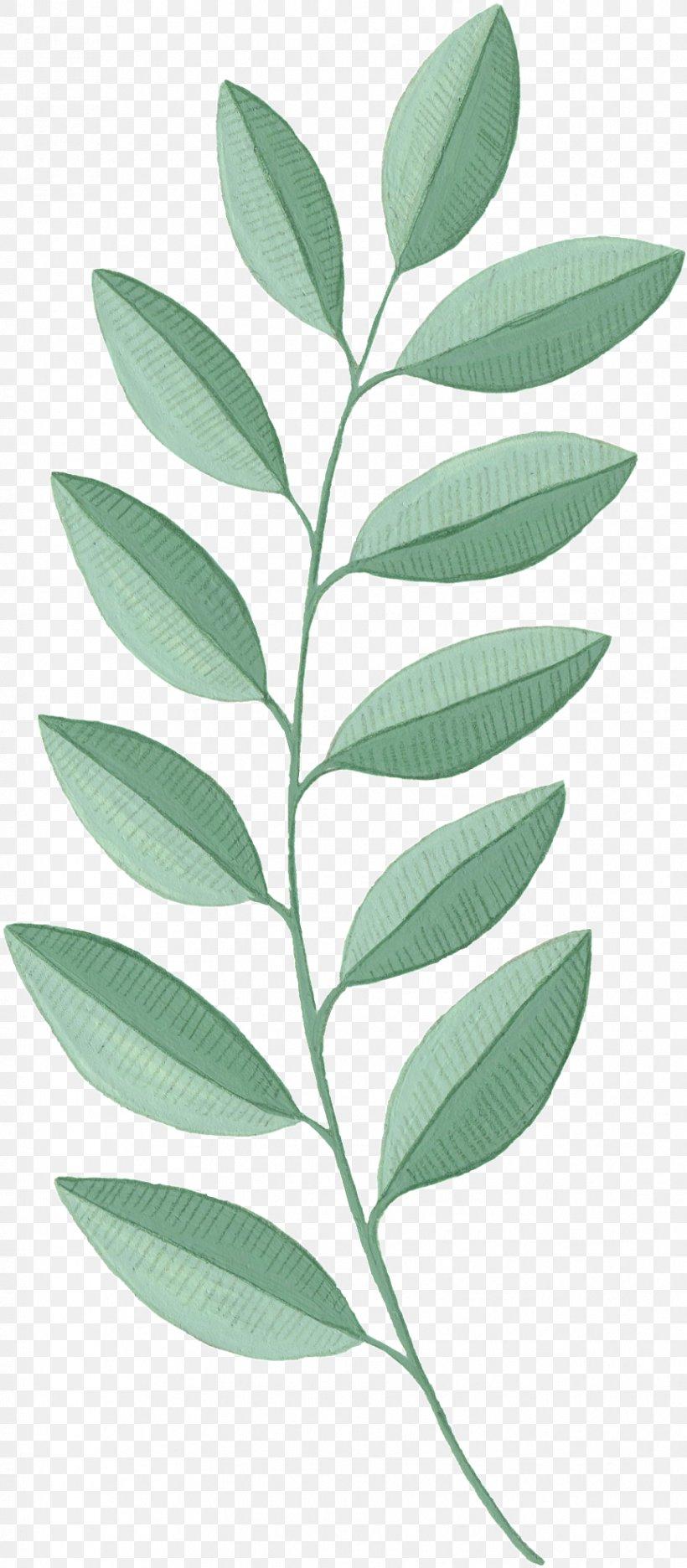 Leaf Plant Flower Tree Woody Plant, PNG, 866x1978px, Leaf, Flower, Herbaceous Plant, Plant, Plant Stem Download Free