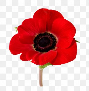 Flower - In Flanders Fields Remembrance Poppy Armistice Day Lest We Forget PNG