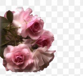 Flower - Flower Bouquet Romance Film Garden Roses PNG