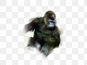 Orangutan - Gorilla Orangutan Gibbon Common Chimpanzee PNG