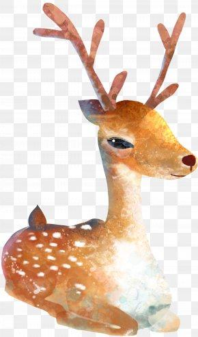 Deer - Sika Deer Watercolor Painting Cartoon Illustration PNG