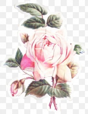 Hybrid Tea Rose Herbaceous Plant - Bouquet Of Flowers Drawing PNG