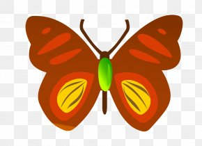 Vector Butterfly - Insect Butterfly Cdr Download PNG