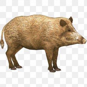 Boar - Wild Boar Icon PNG