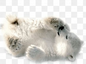 Polar White Bear - Polar Bear Clip Art PNG