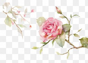 Chinese Style Hand-painted Flowers Vector - Centifolia Roses Garden Roses Floral Design Cut Flowers Flower Bouquet PNG