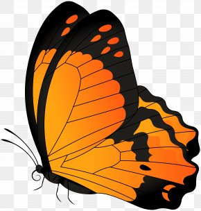Butterfly Orange Transparent Clip Art Image - Butterfly Clip Art PNG