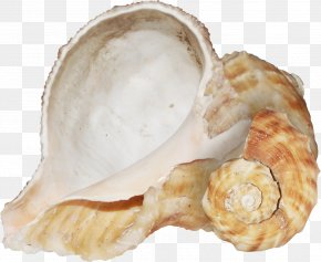 Brown Texture Conch - Conch Texture Mapping PNG