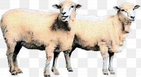 Sheep Cat Animal Dog Goat PNG
