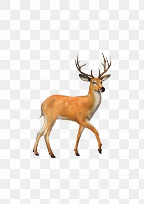 Deer - White-tailed Deer Mule Deer Clip Art PNG