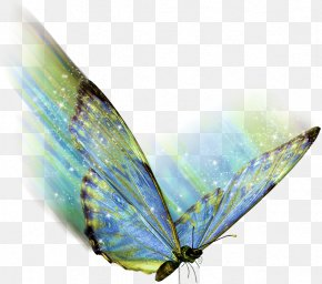 Watercolor Butterfly - Butterfly .az .net .de .hu PNG