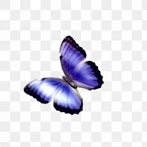 Blue Butterfly - Butterfly Phengaris Alcon Chemical Element PNG