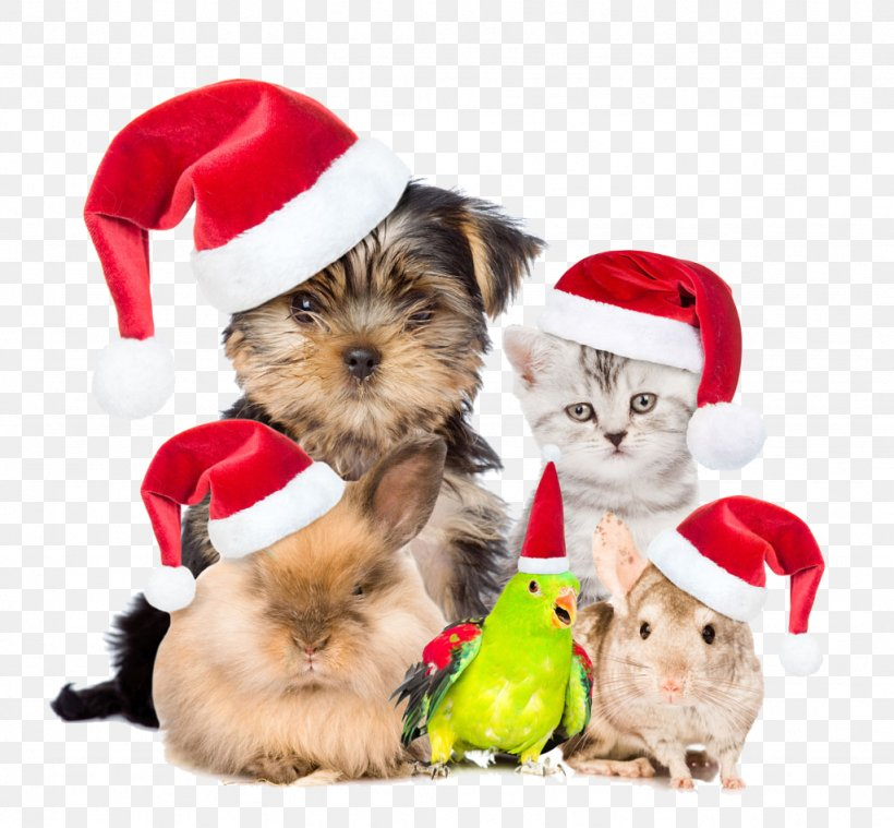 Pets Are Also Buckle Creative Christmas HD Free, PNG, 1024x948px, Chihuahua, Carnivoran, Cat, Christmas, Christmas Music Download Free