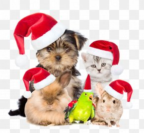 Pets Are Also Buckle Creative Christmas HD Free PNG