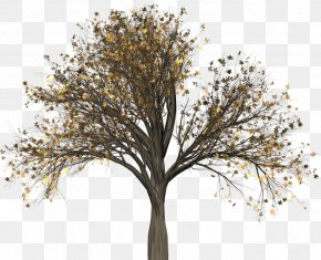 Tree Pull Down - Tree Woody Plant Branch Elm PNG