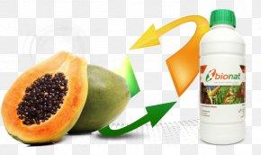 Papaya - Papaya Celebrating The Pawpaw Fruit Health PNG