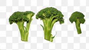 Orange Broccoli Bugs - Broccoli Cuisinart CookFresh Digital Glass Steamer STM-1000 Vegetable Cooking Food PNG