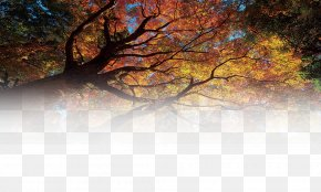 Forest - Tree Forest Matorral Wallpaper PNG
