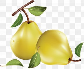 Pear Image - Asian Pear Clip Art PNG