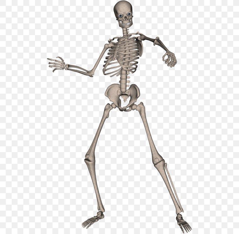 Skeleton Skull, PNG, 500x800px, Human Skeleton, Arm, Bone, Display Resolution, Human Download Free