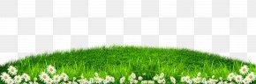 Green Grass White Border Texture - Grass Wallpaper PNG