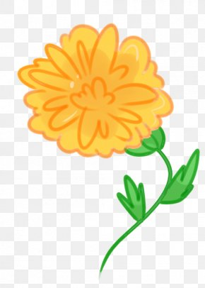 Marigold - Mexican Marigold Calendula Officinalis Flower Drawing Clip Art PNG