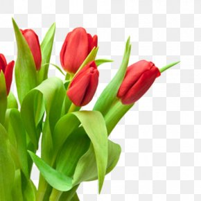 Bouquet Of Red Tulips In Kind - Tulip Red Flower Bouquet White PNG