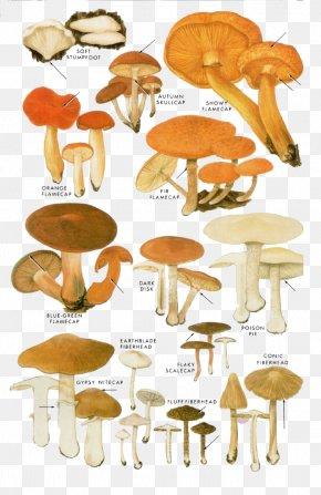 Cartoon Yellow Mushrooms - Edible Mushroom Fungus Shiitake Illustration PNG