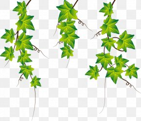 Hand-painted Ivy Leaf Elements - Common Ivy Stock Photography Clip Art PNG