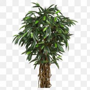 Aquatic Plants - Perforate St John's-wort Tree Areca Palm Plant Arecaceae PNG