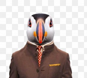 Animals Penguins - Spanish Fighting Bull Zoo Portraits Atlantic Puffin Bald Eagle Sloth PNG