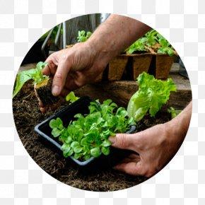 Hortênsia - Cottage Garden Forest Gardening Landscaping PNG