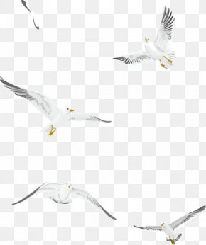 Flying White Seagull Vector Material - Gulls Bird PNG