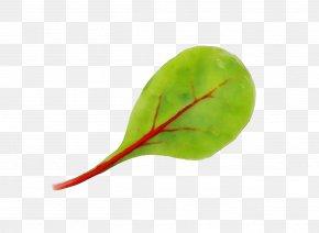 Plant Stem Leaf Vegetable - Leaf Green Plant Flower Vegetable PNG