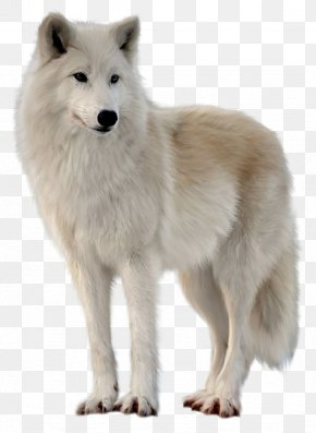 Greenland Dog Images, Greenland Dog PNG, Free download, Clipart