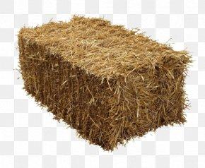 Plant Beige - Wheat Cartoon PNG