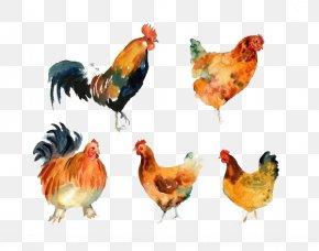 Chicken - Rooster Chicken Meat Beak Animal PNG