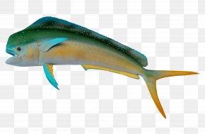 Fish - Fish Marine Biology PNG