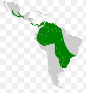 Map - South America Latin America Clip Art United States Of America Map PNG