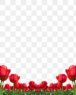 Mothers Day Background Templates Tulips - Tulip Red Clip Art Flower PNG