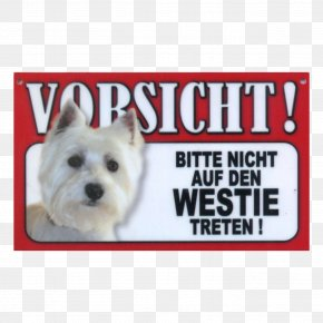 Puppy - West Highland White Terrier Cairn Terrier Bolonka Puppy Pekingese PNG