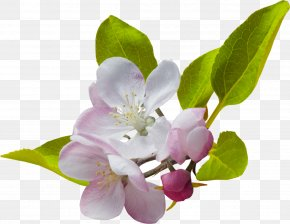 Spring Flowers - Border Flowers Desktop Wallpaper Clip Art PNG