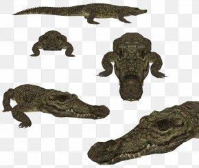 Komodo - Nile Crocodile Crocodiles Zoo Tycoon 2 American Alligator PNG
