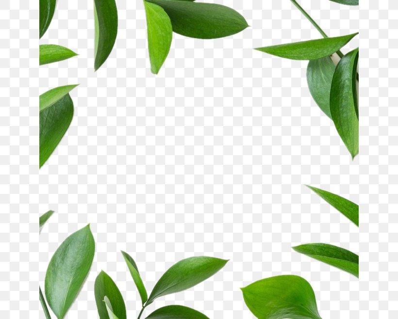 Leaf Green Icon, PNG, 658x658px, Leaf, Branch, Charm Bracelet, Grass, Green Download Free